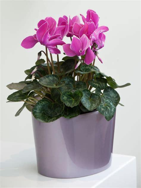 indoor flowers winter flowers for indoor gardens hgtv