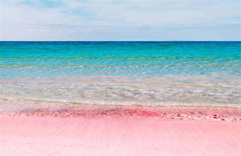 beaches with pink sand the science behind bermuda s pink sand beaches viva