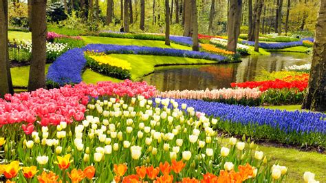 Amsterdam Flower Garden Keukenhof A Of Tulips In Amsterdam The Netherlands Traveldigg
