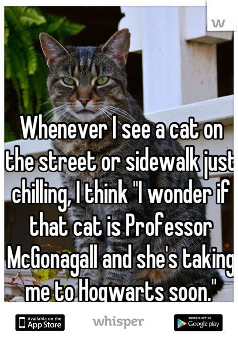 Professor Cat Meme - cat professor meme www imgkid com the image kid has it
