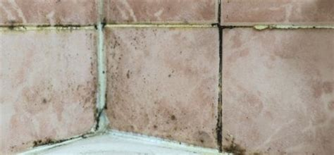 Black Mold In Shower Grout by Black Mold Growing In The Bathroom Here S What To Do