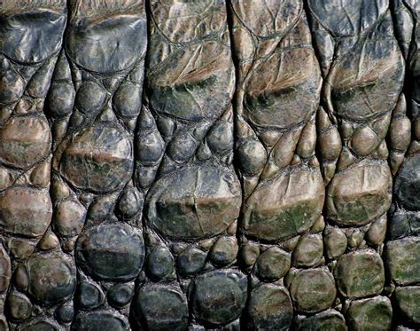 Alligator Skin by The Need For Alligator Skin Learning How To Lead