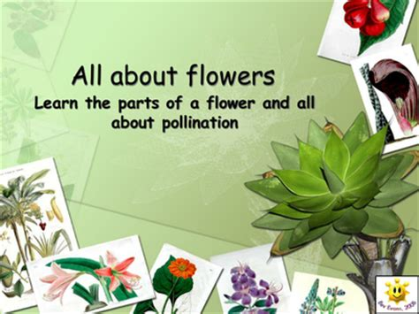 powerpoint tutorial ks2 plants flowers and pollination powerpoint resources tes
