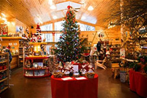 pictures plants beautiful christmas tree farm