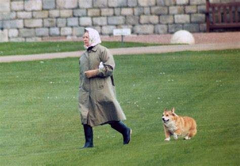 how many corgis does the queen have how many corgis does the queen have 100 how many corgis