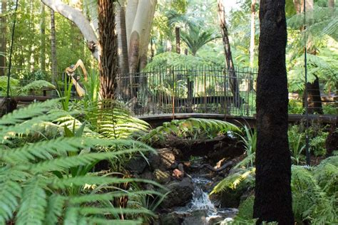 Royal Botanical Garden Melbourne Royal Botanic Gardens Melbourne S Fern Gully Reopens Abc News Australian Broadcasting