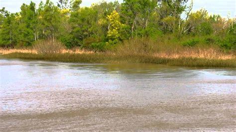 a orillas del rio 0062514628 juncos meciendose por el viento a orillas del rio de la plata youtube