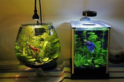blue small aquarium designs betta fish tank setup ideas that make a statement