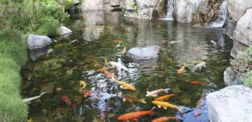 Building Backyard Pond Backyard Koi Pond Designs Sweeney Feeders