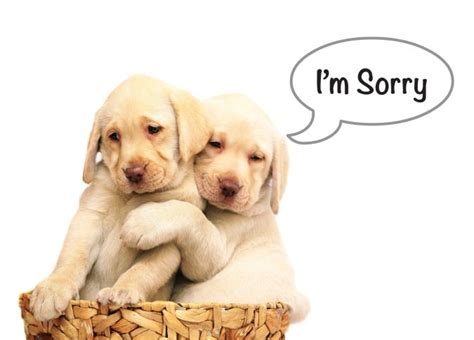 im sorry puppy image gallery sorry puppy