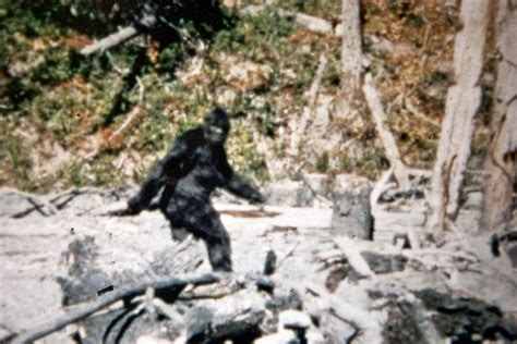 the of bigfoot project proof that bigfoot is real by hilary wagner
