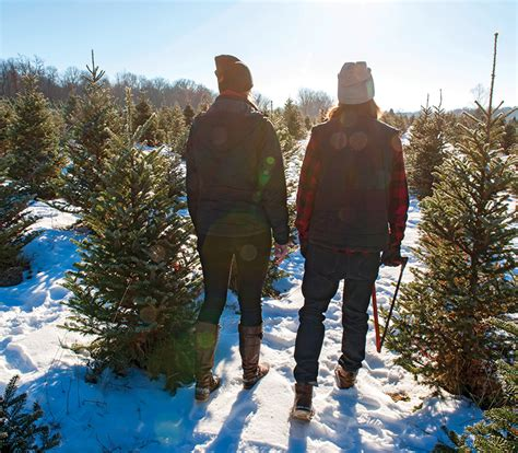 what kind of christmas tree should you buy chatelaine