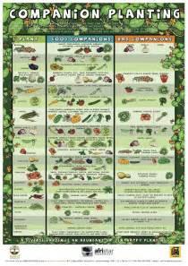 companion planting chart growin acres