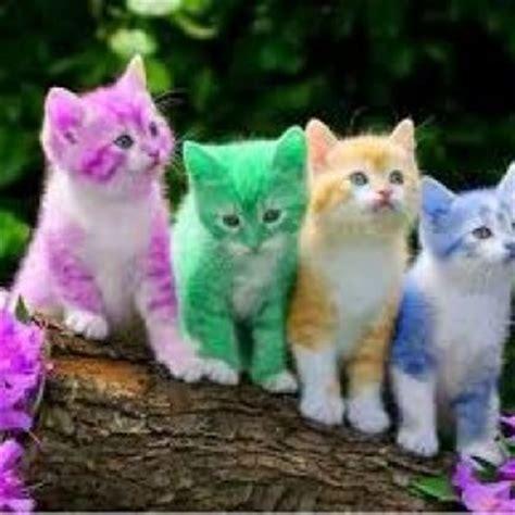 kitten or cat feed bag pet supply