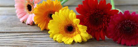 fiori ad agosto cosa fare ad agosto in giardino il giardino di veca