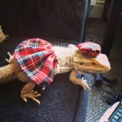 scottish kilt costume bearded dragon clothes small