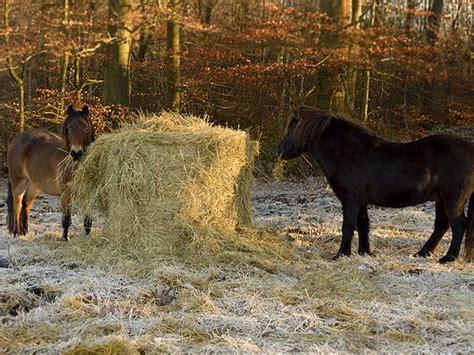 suche zweifamilienhaus zum kauf reitanlage pferdehof reiterhof kaufen bei immowelt at