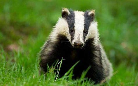 rwwc badger