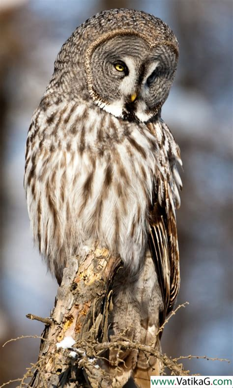 wallpaper android owl download owl live wallpapers android live wallpapers for