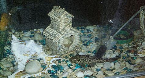 Pompa Aquarium Kapasitas Besar pentingnya mengenal pompa aquarium untuk kesejahteraan