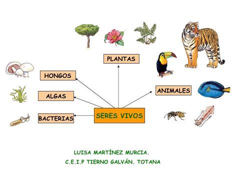 cadenas troficas introduccion los seres vivos