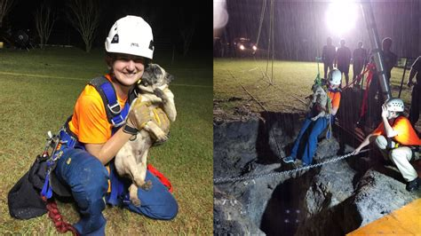 orlando pug rescue pug rescued from 30 foot sinkhole in florida