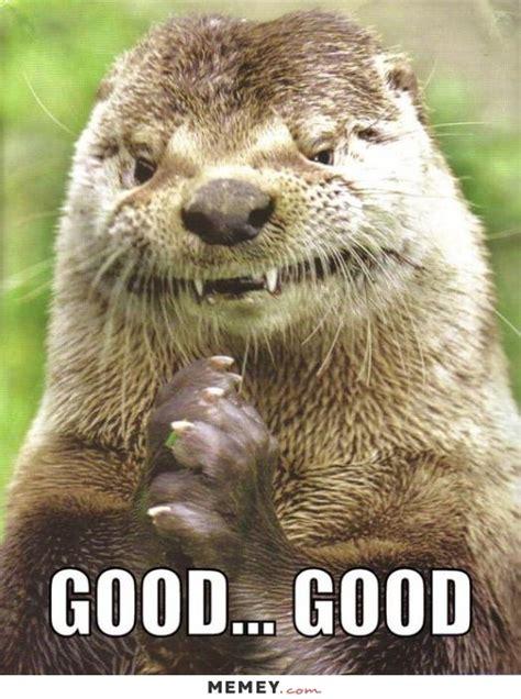 Funny Otter Meme - otter memes funny otter pictures memey com