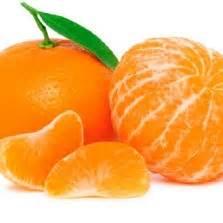 Bibit Benih Seed Buah Jeruk Sunkist Orange Sweet And Fresh Fruit bibit buah asam kandis