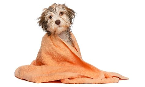 full service dog grooming green dog wash 56 off dog wash depot ewing nj groupon