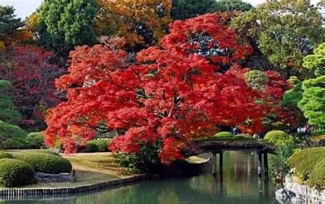 imagenes korea japon imagenes paisajes naturales imagenes de paisajes