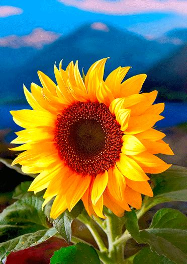 fiori ascii freetoedit sunflower gif photography gif by mari