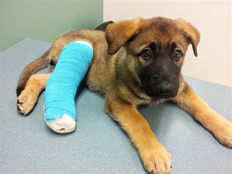 puppy broken leg s journey as a socializing and building confidence