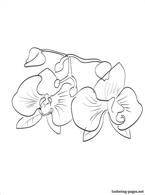 Orchid Coloring Page For Kids Coloring Pages Orchid Coloring Pages