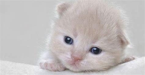 imagenes tiernas gatitos bebes mira estas tiernas imagenes de gatitos bebes imagenes de