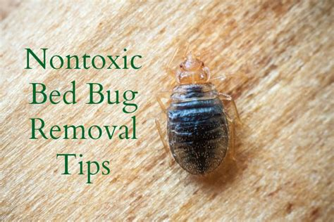 removing bed bugs natural ways to eliminate bed bugs the healthy home