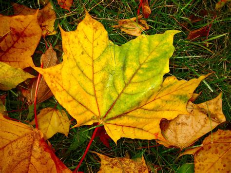 Handmade Leaf Paper - papery ideas ideas for using handmade paper