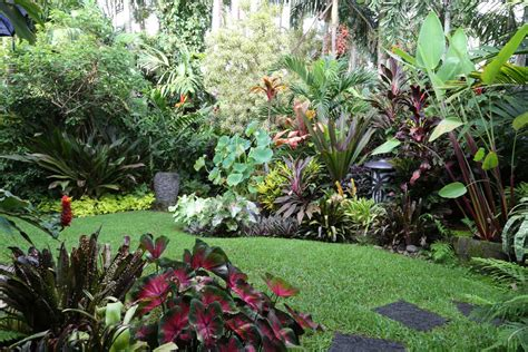 how to create a tropical backyard how to create a tropical garden even in the uk