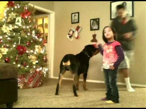 rottweiler attacks owner rottweiler unexpectedly attacks owner while
