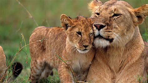 libros de documentales de animales en pdf la 2 apuesta por la divulgaci 243 n el cine la m 250 sica la ciencia y los viajes en su nueva temporada