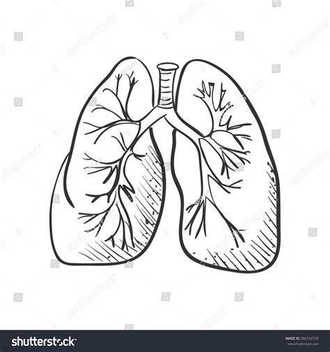 doodle how to draw image gallery lung line drawing