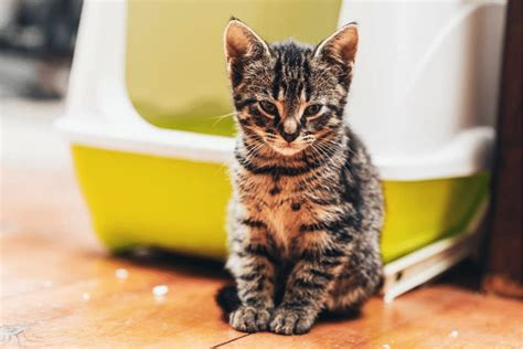 my is constipated what can i do is your cat constipated 4 safe and effective home remedies