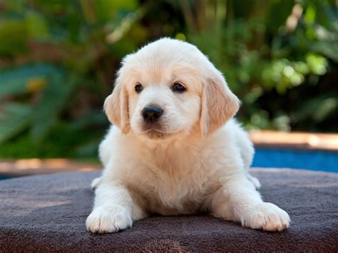 best age to a puppy the 11 best dogs for children