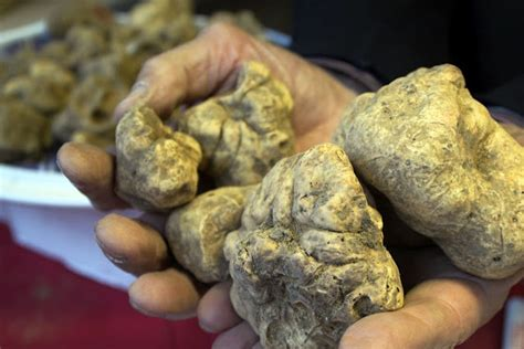 grow le 1000 images about growing truffles on the