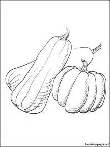 what color is squash summer squash or zucchini coloring page coloring pages