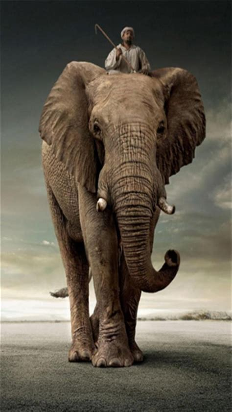 wallpaper iphone 6 elephant elephant rider animal iphone wallpapers iphone 5 s 4 s