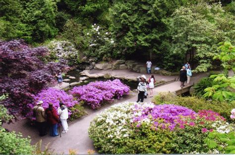 Springs Rhododendron Garden by Rhododendron Festival Rhododendron