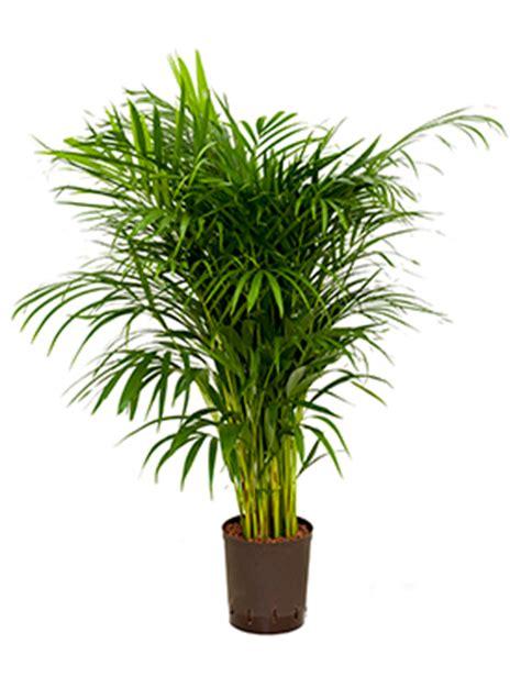 Hydrokultur Pflanzen Kaufen 1235 by Hydrokultur Pflanzen Kaufen Hydrokultur Pflanzen Im