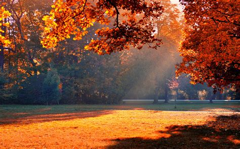 beautiful fall 4k hd desktop autumn trees hd desktop wallpapers 4k hd