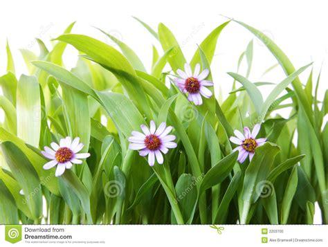 grass  flowers stock photo image  backyard harmony
