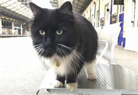felix the railway cat books felix the railway cat thor the eternals saga vol 2
